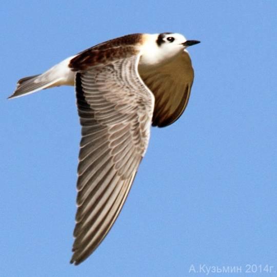 фото летящих птиц весной