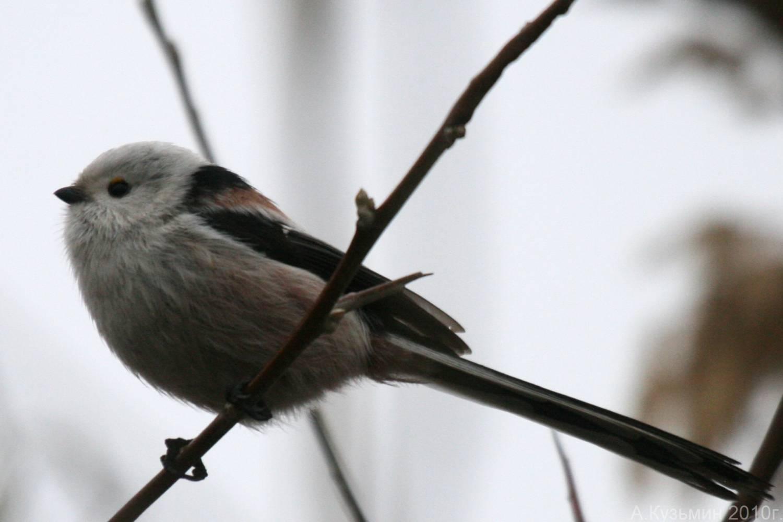 Хищные птицы ростовской области